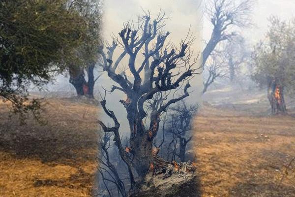 جيجل تحترق.. شهادة عائد من قلب النيران