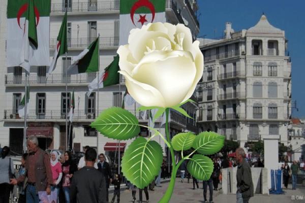 غياب ثقافة التسامح المجتمعي في الجزائر