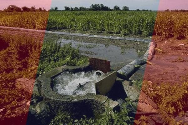 سقي الخضر والفواكه منذ عقود بمياه الصرف الصحي!