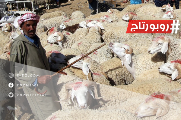 الجزائر.. أحوال عيد الأضحى في زمن كورونا