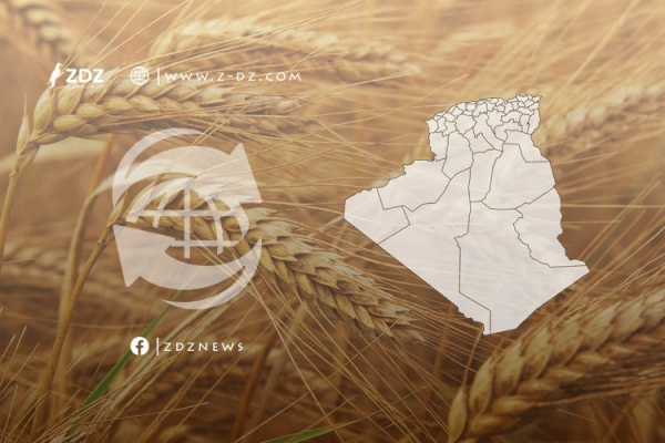 الجزائر من مُصَدِّرٍ إلى مُسْتَوْرِدٍ للقمح.. لماذا؟!