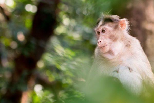 ما هو الفيروس القردي الذي أبلغت عنه الصين؟