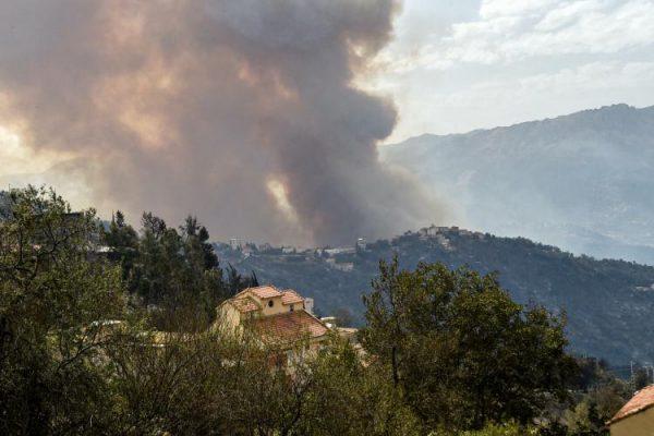 انطلاق عملية تنظيف الغابات المتضررة من الحرائق